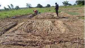 Compost maken in Ghana