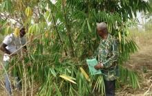 Bamboe doet leven
