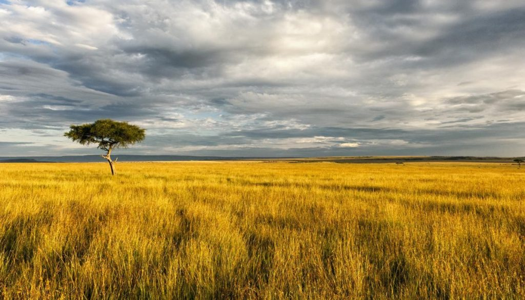 african-savanna