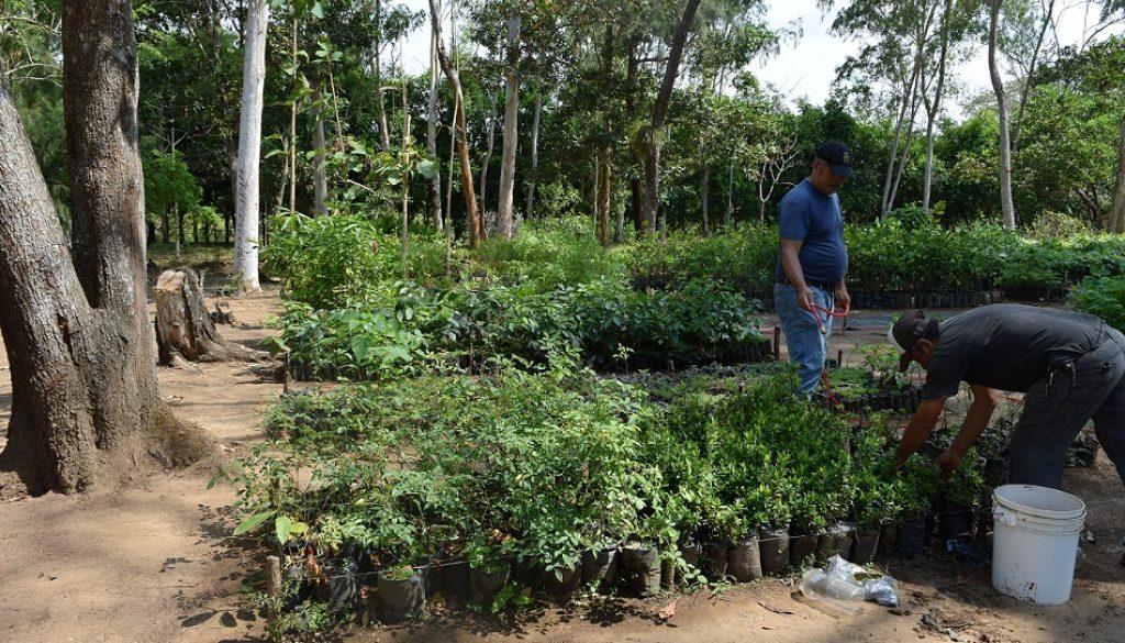 Nicaragua (GESP 2018)