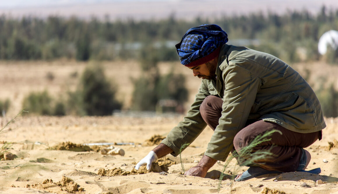 Egypte (SEKEM) sekem bomen planten bij nieuwe boerderij in woestijn